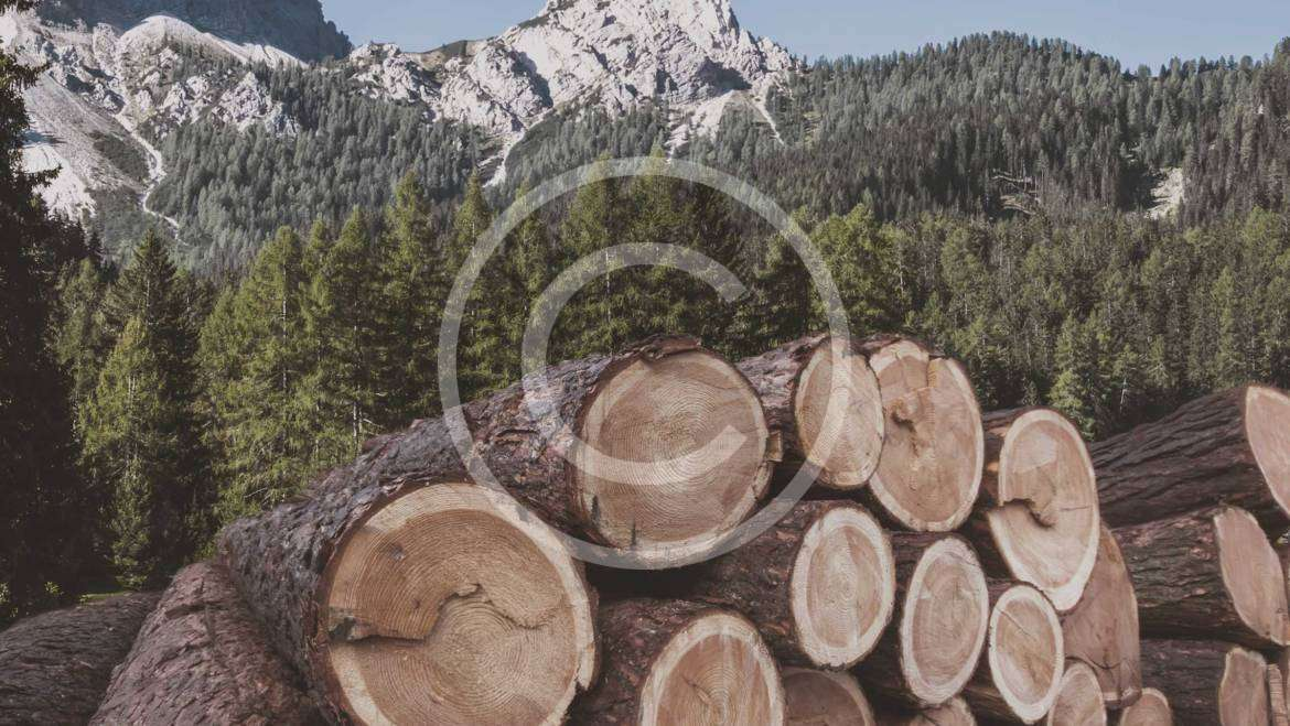 Timber Purchasing